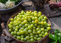 Indian gooseberry fruits at local market (phuong.sg@gmail.com) Tags: agriculture amla appetite asia astringent ayurveda ayurvedic berry cuisine delicious eating edible emblica fresh fruit gooseberry green hard health healthy herb herbal india ingredient juicy meal medicinal medicine natural nature nutrition officinalis organic phyllanthus results ripe round seeds sour summer sweet taste tree tropical vegetarian vitamin yellow