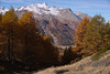 Fall (Marco MCMLXXVI) Tags: cogne aosta valle grivola italy alps alpi autunno autumn fall larches mountain montagna outdoor landscape scenery mountainpeak snow ice capped trees forest trail hiking escursionismo travel tourism sony ilce6000 a6000 pz1650 foliage rawtherapee europe mountainside wood cliff canyon crag ridge tree sky