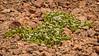 Sobreviviendo (Andres Puiggros) Tags: d500 arica chile expedicion nikon workshop planta flora surviving sobreviviendo suri plaza suriplaza