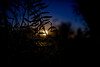 Through (Keoni Cabral) Tags: sunset sun evening leaf leaves tree trees nature outdoor outdoors silhouette spiderweb web cobweb