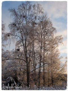 Winter landscape in golden light