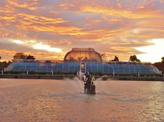 "Artful Autumn At Kew Gardens @ 28 October 2017 - Palm House at Sunset (Kam Hong Leung 06) Tags: ""beatriceleung"" kam ""kamhongleung"" ""leungkamhong"" 'artfulautumn' kew ""kewgardens"" ""royalbotanicgarden"" london richmond garden ""palmhouse"" 'princessofwalesconservatory' tree arboretum sculpture art autumn waterlily flower 'commonlime' 'woodlandhouse' fungi painting peacock treeling 'taichi' halloween 'rebeccalouiselaw' 'lifeindeath' 'willowsculpture' 'austrianpine' 'henrymoore' 'redoaktree' lotus 'nelumboshiroman' 'victoriaamazonica' 'xanthorrhoeajohnsonii' cactus cleistopsis sunset 'nigelross' 'woodyfoxwillow' 'claudiawegner' girl elf 'fairytale' fantasy"