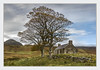A ruin at Lettermore (Katybun of Beverley) Tags: ruin lettermore sutherland assynt scotland landscape benloyal cnocnancuilean trees rural outdoors autumn autumnal wall clouds cottage croft dwelling tree field building