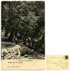 Saluti da Roncegno, castagni via alle Fonti, Montibeller figlio, spedita nel 1907 (Ecomuseo Valsugana | Croxarie) Tags: cartolina roncegno roncegnoterme 1907 castagno