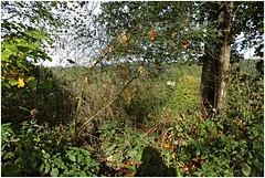 monschau 30 (beauty of all things) Tags: eifel monschau herbst autumn flora