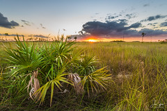 Everglades Sunset (J.Coffman Photography) Tags: everglades season preserve state fl sunshine wilderness hiking hike d810 nikon clouds marsh forest states united florida big cypress national park landscape trees swamp wet water