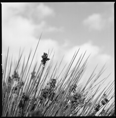 like a porcupine (ukke2011) Tags: hasselblad503cw planarcfe8028 ilfordpanf selfdeveloping rodinal 150 film pellicola 6x6 square 120 bw mediumformat blackandwhite