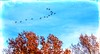 Sure Signs Of Autumn... (Wes Iversen) Tags: brighton canadageese htt kensingtonmetropark michigan milford nikkor18300mm texturaltuesday autumn autumncolor birds clouds fall geese leaves nature sky texture trees wildlife treemendoustuesday