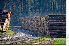 vom Sturm erwischt (Mr.Vamp) Tags: mrvamp vamp sturmholz holz baumstämme bäume bayrischerwald bayern november2017 herbst sturm natur naturgewalt stormwood wood logs trees bavarianforest bavaria autumn storm nature powerinnature bayerischerwald tannödbüchlberg