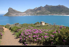 View from Chapmans Peak Drive across Hout Bay, South Africa (JH_1982) Tags: chapmans peak drive hout bay houtbaai western cape coast küste mountains berge beach coastline atlantic ocean nature flower landscape scenery scenic south africa rsa za südafrika sudáfrica afrique sud sudafrica 南非 南アフリカ共和国 남아프리카 공화국 южноафриканская республика جنوب أفريقيا