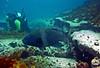 P1014101.bmp (LoxPix2) Tags: loxpix australia bareisland scuba diving sydney artilleryshells