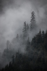 Great Bear Rainforest (robertdownie) Tags: britishcolumbia canada mistytrees clouds day fog forest greatbearrainforest growth inthemist landscape mist mistyforest nature nopeople outdoors pacificnorthwest rainforest ridge scenics sky steep tranquilscene tranquillity tree insidepassage fjord