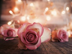 T H E   R O S E   T R I O L O G Y (Vivi Black) Tags: verträumt dreamy märchen tale bokeh stilllife home rosa light soft focos inside trio rose