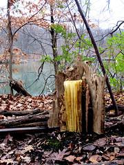 installation-tree_w (bgmills) Tags: environmentalart landart outdoorinstallation artonthetrail artinnature natureinart bookart