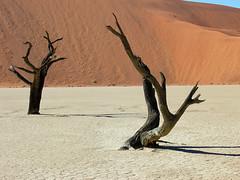 Sossusvlei - Deadvlei - Namibia (lotusblancphotography) Tags: nature africa afrique namibia sossusvlei deadvlei desert désert sand sable dune tree