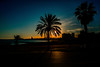 Sunset beach...... (Dafydd Penguin) Tags: sunset sun set beach sea water mediterranean sand palm tree trees promenade cornich barcelona catalunya catalonia spain europe silhouette nikon df nikkor 20mm af f28d