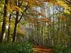 Autumn walk (yvonnepay615) Tags: panasonic lumix gh4 autumn nature woods lynford norfolk eastanglia uk coth coth5
