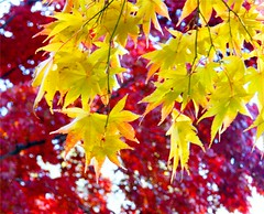 Red and Yellow Fall Leaves (Stanley Zimny (Thank You for 26 Million views)) Tags: fall seasons autumn colors water tree leaves red yellow