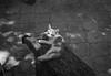 *** (gcond) Tags: bw blackwhite blackandwhite expired expierdfilm selfdeveloped people leica leicam6 35mm leitz rangefinder r09 grain drama dramatic travel theanalogueproject hyperfocal buyfilmnotmegapixels sunny holidays lifestyle filmphotography analogphotography outdoor itsnotacapture film filmisnotdead kingofbokeh vilage monochrome kodak moldova paralax allmanual analog nature landscape shootfilm vintagecamera portrait typed littledoglaughednoiret