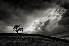 Tree with Nearing Strom (StefanB) Tags: 1235mm california cloud em5 geotag outdoor tree treescape usa uvasroad morganhill storm clouds
