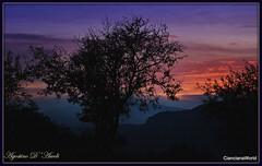 Paesaggio al tramonto con albero di mandorlo - Novembre-2017 (agostinodascoli) Tags: tramono nikon nikkor cianciana sicilia sunset agostinodascoli mandorlo alberi cielo nature texture