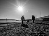 Winter sun 2 (MiguelHax) Tags: blackandwhite bw wb monochrome noiretblanc blackwhite silhouette beach sun dogs sea groyne