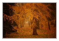déjà vu (Sergei P. Zubkov) Tags: fall autumn park trees velikiynovgorod november yellow