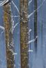 winter forest (sami kuosmanen) Tags: intentionalcameramovement icm finland forest flash suomi syksy autumn winter snow salama taivas tree talvi kuusankoski kouvola luonto light lumi puu nature north europe expression bokeh blur