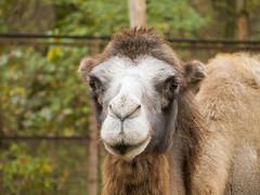 hello (Dreamaxjoe) Tags: animal zoo camel tree