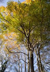 Vosbergen (Jeroen Hillenga) Tags: vosbergen drenthe paterswolde herfst herfstkleuren autumn fall najaar bos bomen forest wald netherlands nederland natuur nature natuurgebied natur