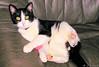 Poussy (jean-daniel david) Tags: chat animal félin noiretblanc