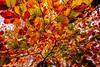 HOSTOAK UDAZKENA 2 (juan luis olaeta) Tags: paisajes landscape otoño autumn udazkena colores hojas hostoak canon photoshop lightroom