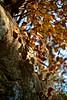 _MG_3882 (Andrea Sandorfi) Tags: winter fall autunno colori carso rilke