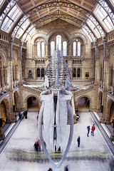 The Whale and the Caterpiller (Sean Hartwell Photography) Tags: naturalhistorymuseum london museum bluewhale whale skeleton caterpiller people movement motion blur