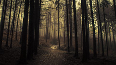 When the Woods are mourning (Netsrak) Tags: baum eu europa europe forst januar january landschaft natur nebel wald fog forest landscape mist nature tree trees winter woods bäume rheinbach nordrheinwestfalen deutschland de