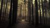When the Woods are mourning (Netsrak) Tags: baum eu europa europe forst januar january landschaft natur nebel wald fog forest landscape mist nature tree trees winter woods bäume rheinbach nordrheinwestfalen deutschland de