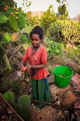 Fruit for the Traveller (Rod Waddington) Tags: africa african afrique afrika äthiopien ethiopia ethiopian ethnic etiopia ethnicity ethiopie etiopian tigray tigre rural girl culture cultural child cactus fruit traveller bucket mountains trees