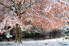 Winter is coming (SM_WZ) Tags: germany hessen snow wetterau baum buedingen bã¤ume bã¼dingen forest ice lake natur nature see tree wald weiher winter wodland