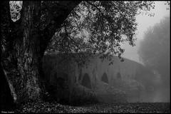 Yvré L'Evêque (Sarthe) (gondardphilippe) Tags: yvrélevêque sarthe maine paysdelaloire noiretblanc blackandwhite bw monochrome pont bridge arbre tree paysage landscape ngc