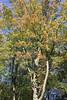 Aucun signe d'automne (No Sign of Autumn) (JB by the Sea) Tags: montreal montréal quebec québec canada september2017 parcdumontroyal mountroyalpark lacauxcastors beaverlake tree trees
