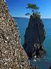 A rock near Portofino (Vid Pogacnik) Tags: italia italy liguria portofino rock tree