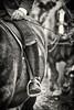 Leonhardiritt 2017 (CA_Rotwang) Tags: horse pferde wallfahrt pilgrimage oberbayern bavaria bayern germany deutschland bad tölz isar tradition tracht reiter equestrian lederhosn leather riding boots reitstiefel stiefel