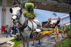 chicago flower and garden show. march 2015 (timp37) Tags: march 2015 chicago illinois navy pier flower garden show horse statue carriage