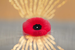 Lest we Forget (A Great Capture) Tags: november11th love peace thankful iremember forget we lest remembranceday poppy agreatcapture agc wwwagreatcapturecom adjm ash2276 ashleylduffus ald mobilejay jamesmitchell toronto on ontario canada canadian photographer northamerica torontoexplore fall autumn automne herbst 2017