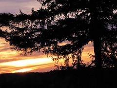 Sky Show (Cher12861 (Cheryl Kelly on ipernity)) Tags: fromspring2017 mortonarboretum lisleillinois tree silhouette sunset landscape treescape nature beauty golden