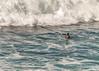 Honolua Bay Surf (r1aviator) Tags: honoluabay maui hi surfphotographer cjsmithart beach