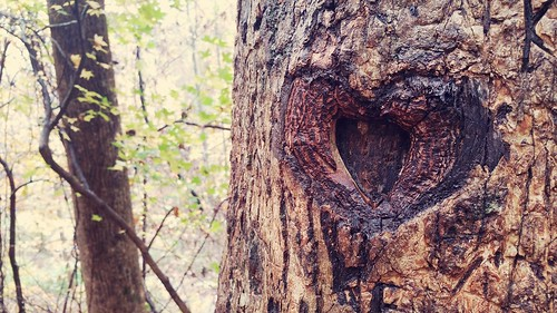 It's Knot About Love :-)