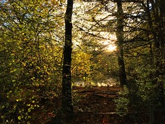 Autumn Sunlight (Marc Sayce) Tags: sunlight pond trees colours fall leaves lodge autumn november 2017 alice holt forest hampshire farnham surrey south downs national park