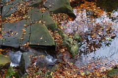 Flowing leaves (Baubec Izzet) Tags: baubecizzet pentax leaves nature water autumn