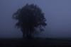 November Morning (betadecay2000) Tags: wetter weer weather meteo fog foggy nebel nebelig fall autumn herbst herststimmung morgen 07112017 baum bäume tree trees germany deutschland europa münsterland nrw trüb trübe photooftheday